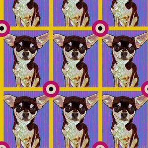 Chihuahua Bullseye