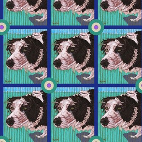 Border Collie Bullseye