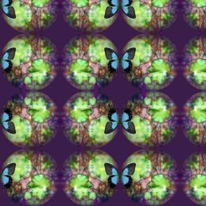 Fungi Spots - Blue Morpho