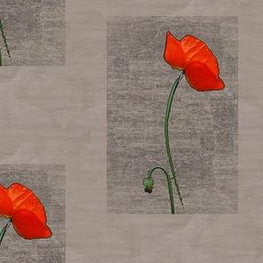 Fenced-in Poppy