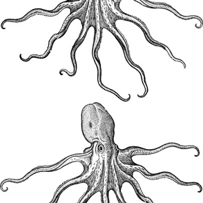 Huge Vintage Octopus