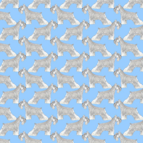 Mini Schnauzers pose - blue