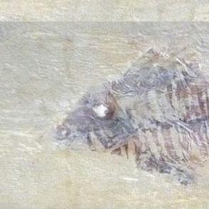 fossilised Fish Sticks