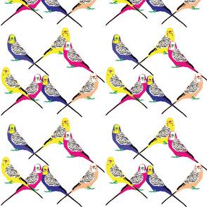 Parakeets Looking at You - Bright