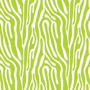 girls rock green zebra stripes
