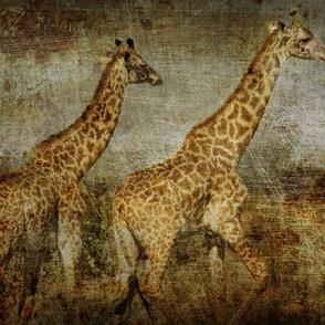 AMBOSELI KENYA giraffe