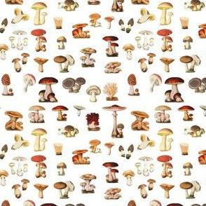Antique Mushrooms on White, mini