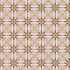 Solanum pattern II