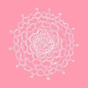 Pink Coral Chrysanthemum