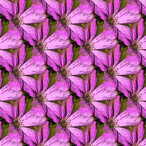 Cranesbill pink