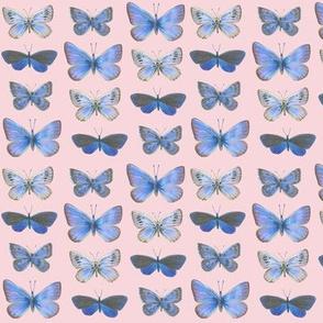 small butterflies, sunrise-F5CCD3