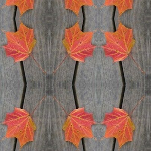 Maple Stripes