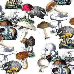 Badger Badger Mushroom