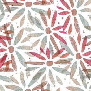 Pink, stone daisy