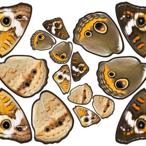 Buckeye Butterfly Costume Wings