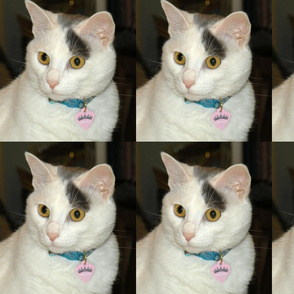 Zoe, purr-fect cat