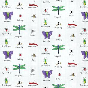 Teddy's Bug Collection