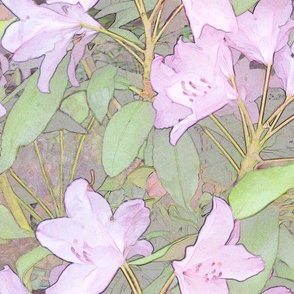 Pastel Rhododendron