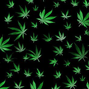 Green Marijuana Leaves
