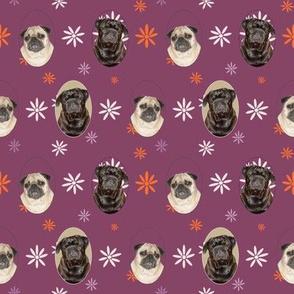 pugs loving purple