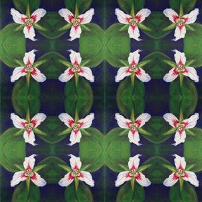 paintedtrillium