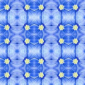blueflowercloseup