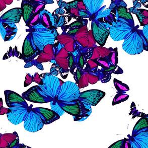 flutter2