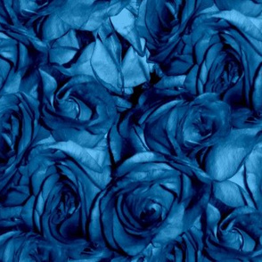 Roses Can Sing the Blues