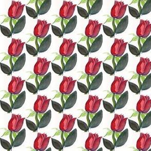 TulipRose