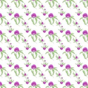 alfalfa flowers white
