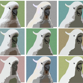 Subdued AW Cockatoos by Su_G_©SuSchaefer
