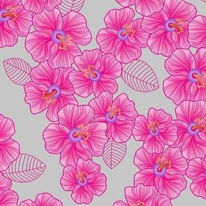 Pink_on_grey