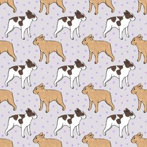 French Bulldog toons and stars - purple