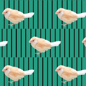 Psychedelic Finch