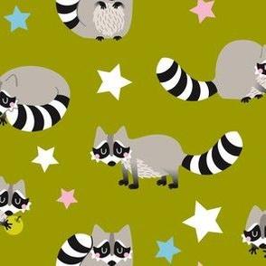 raccoon with stars