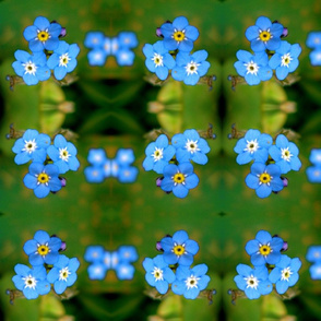Forget me knots in blue and green