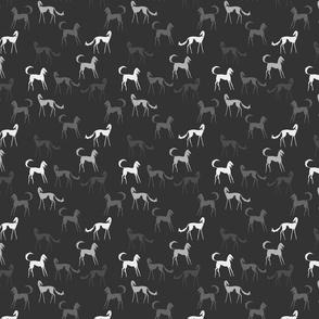 salukis grey