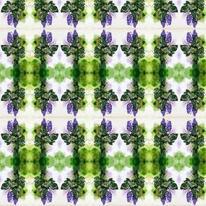 aceo_grape