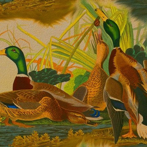 Antique Mallard Ducks - Robert Havell
