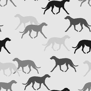Deerhound black-grey