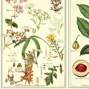 Botanical Spices - 24in