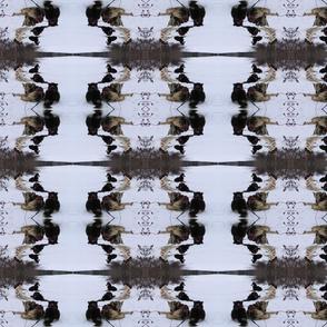 Sled Dogs Through a Kaleidoscope