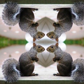Squirrel Conference