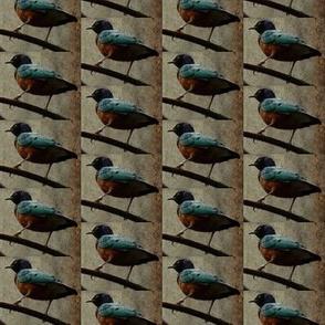 Tropical Birds (rustic)