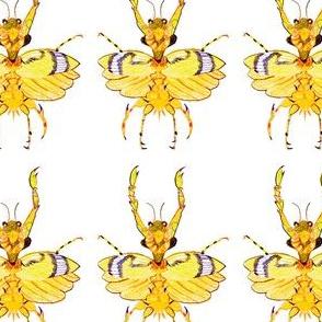 Skinny Bug