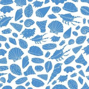 scattered shells light blue