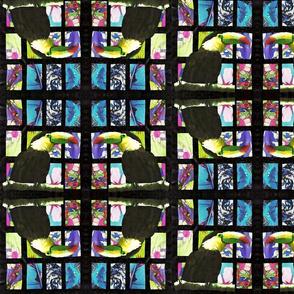 Toucan Square Dance