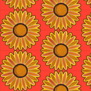 big daisy