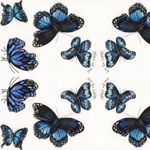 blue butterfly kalidescope