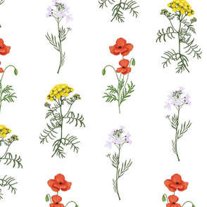 Fleurs sauvages on white